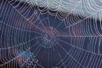 Thumbnail Spider web with morning dew, Lake Staffelsee, Seehausen, Murnau, Upper Bavaria, Bavaria, Germany, Europe, PublicGround