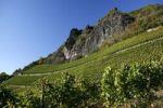 Thumbnail Vines, vineyards, wine-growing area on Drachenfels mountain, Siebengebirge range, Bad Honnef, North Rhine-Westphalia, Germany, Europe