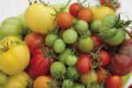 Thumbnail Various tomato varieties