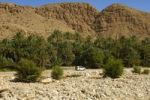 Thumbnail Palm grove in an oasis in the Al Hajar or Hajjar Mountains, Sultanate of Oman, Middle East