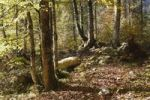 Thumbnail Autumnal mountain forest near Wildbad-Kreuth, Tegernsee Valley, Upper Bavaria, Bavaria, Germany, Europe, PublicGround