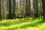 Thumbnail Forest in spring