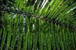 Thumbnail rainforest Llanura de San Carlos - Costa Rica