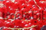 Thumbnail Red currants