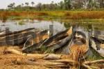 Thumbnail Mokoro canoes, Okavango Delta, Okavango Swamp, Botswana