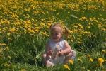 Thumbnail Girl in a meadow with dandelions
