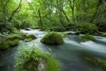 Thumbnail Oirase River, Aomori, Japan, Asia