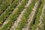 Thumbnail Vineyard, near Ruedesheim, Rheingau, Hesse, Germany, Europe