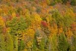 Thumbnail Sugarloaf Pond in autumn, Quebec, Canada