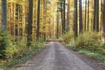 Thumbnail Colourful autumnal forest, Unterallgaeu, Allgaeu, Bavaria, Germany, Europe