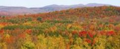 Thumbnail Panorama of autumn forest, Sutton, Quebec, Canada
