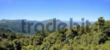 Thumbnail National Park Dorrigo, New South Wales, Australia