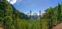 Thumbnail Caldera National Park, La Palma, Canary Islands, Spain,