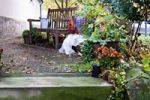 Thumbnail Wooden bench and several potted plants in a yard, autumn