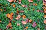 Thumbnail Autumn leaves on grass