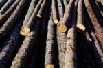 Thumbnail Freshly cut pine wood