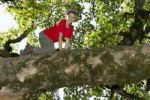 Thumbnail Boy climbing a deciduous tree