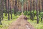Thumbnail Fire rescue path in pine forest near Roztoka, Kampinoski National Park, Poland, Europe