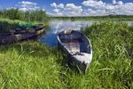 Thumbnail Boats and Narew River near Bokiny village, Narwianski National Park, Poland, Europe