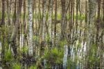 Thumbnail Bagno Podlaskie wetlands, Biebrzanski National Park, Poland, Europe