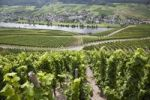 Thumbnail Moselle river and vineyard opposite of Loesnich, Rhineland-Palatinate, Germany, Europe, PublicGround