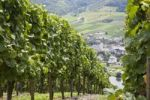 Thumbnail Loesnich wine village and vineyards, Moselle, Rhineland-Palatinate, Germany, Europe, PublicGround