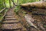 Thumbnail Hiking trail, Ojcowski National Park, Poland, Europe