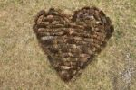 Thumbnail Heart of fir cones