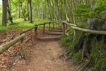 Thumbnail Walking trail in Jasmund National Park, Ruegen island, Mecklenburg-Western Pomerania, Germany, Europe