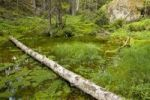 Thumbnail Pond in forest, Tiveden National Park, Sweden, Scandinavia, Europe