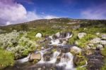 Thumbnail Landscape with brooklet, Femundsmarka National Park, Hedmark county, Norway, Scandinavia, Europe