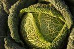 Thumbnail Savoy cabbage ((Brassica oleracea convar. capitata var. sabauda L.)