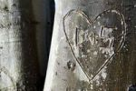 Thumbnail Tree with a carved heart and the letters D and S, Stuttgart, Baden-Wuerttemberg, Germany, Europe