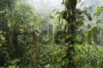 Thumbnail rain in rainforest, Rara Avis, Las Horquetas, Costa Rica