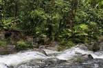 Thumbnail stream in rainforest, Rara Avis, Las Horquetas, Costa Rica