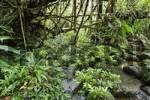 Thumbnail stream in rainforest, Rara Avis, Las Horquetas, Costa Rica