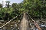 Thumbnail bridge over river in rainforest, Rio Atelopus, Rara Avis, Las Horquetas, Costa Rica