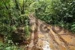 Thumbnail path in rainforest Las Horquetas to Rara Avis in rainforest, Costa Rica