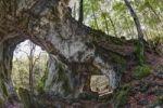Thumbnail Schwingbogen rock arch near Neudorf, Wiesenttal, Franconian Switzerland, Upper Franconia, Franconia, Bavaria, Germany, Europe, PublicGround