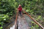 Thumbnail Hiker crossing a bridge in the rain forest, Laguna del Lagarto Lodge, Alajuela, Costa Rica, Central America