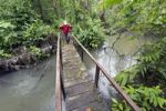 Thumbnail Hiker crossing a bridge in the rain forest, Laguna del Lagarto Lodge, Alajuela, Costa Rica, Central America