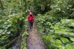Thumbnail Hiker on a bridge in the cloud forest in Tapanti Macizo National Park, Cartago, Costa Rica, Central America
