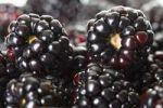 Thumbnail Blackberries (Rubus sectio Rubus), detail view