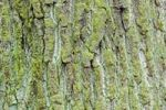 Thumbnail Green coloured bark, Stuttgart, Baden-Wuerttemberg, Germany, Europe