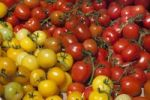 Thumbnail Yellow and red tomatoes