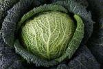 Thumbnail Savoy cabbage (Brassica oleracea convar. Capitata var. sabauda L.)