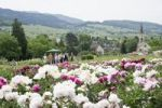 Thumbnail Flower garden near Laufen, Markgraeflerland, Baden-Wuerttemberg, Germany, Europe