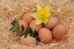 Thumbnail Brown chicken eggs with a daffodil, Easter
