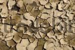Thumbnail dry soil