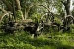 Thumbnail old wood daring wheel
